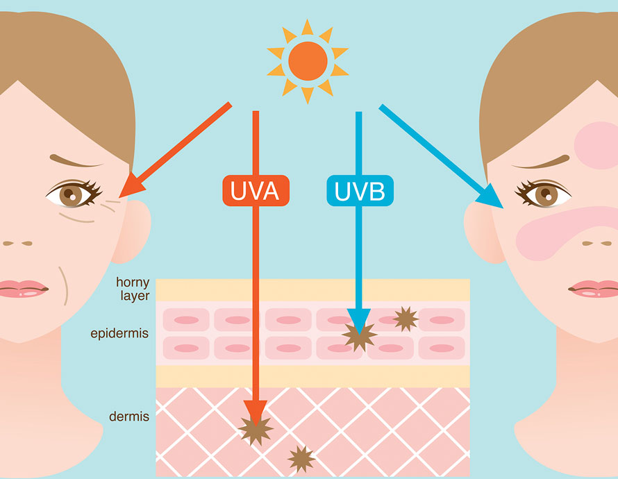 Diagram of Ultraviolet lights and the effects | Ultraviolet Light and Sunscreens Dermatology Institute of America Dermatologist Formulated Skincare Products and Beauty Evaluations